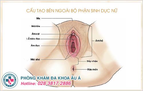 Hình ảnh bộ phận sinh dục nữ đẹp và cấu tạo màng trinh con gái